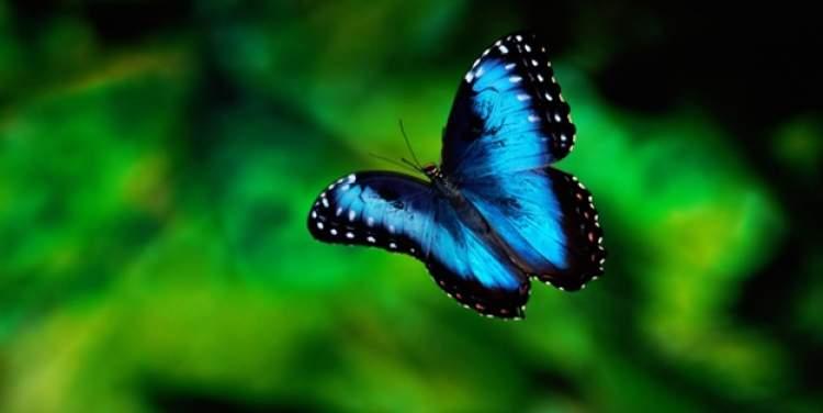mavi kelebek görmek