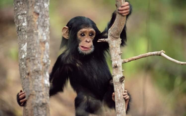 Rüyada Maymun Sevmek