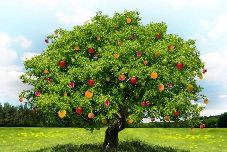 meyve ağacı görmek