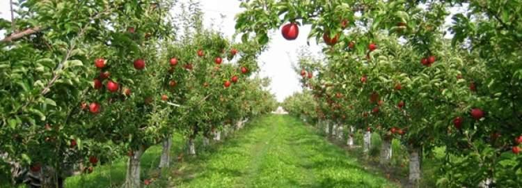 meyve ağaçları görmek ve yemek
