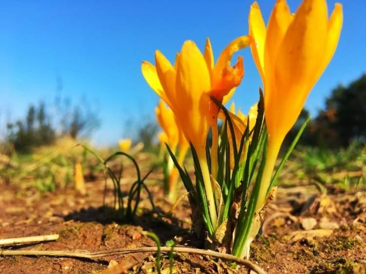 Rüyada Mezara Çiçek Dikmek