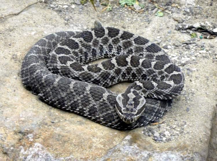 mezarda yılan görmek