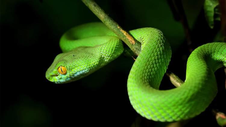 mezarlıkta yılan görmek