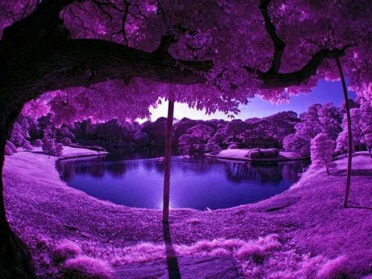 Rüyada Mor Renk Görmek
