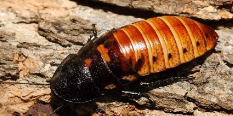Rüyada Ölmüş Hamam Böceği Görmek