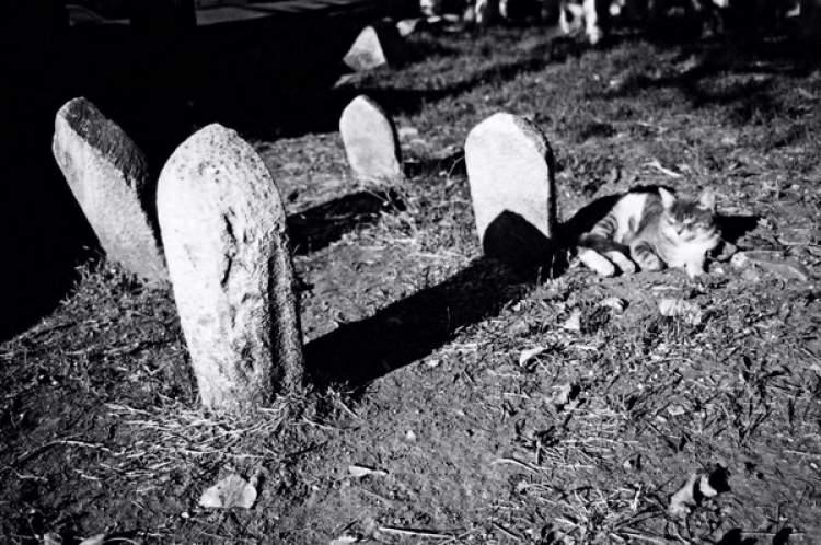 ölmüş insanları görmek