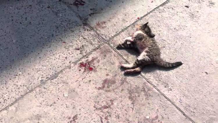 Rüyada Ölmüş Kedi Görmek