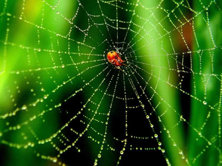 örümcek ağı temizlemek