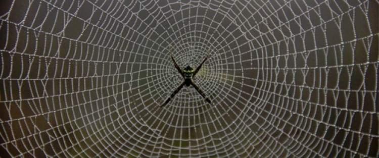örümcek ağını temizlemek