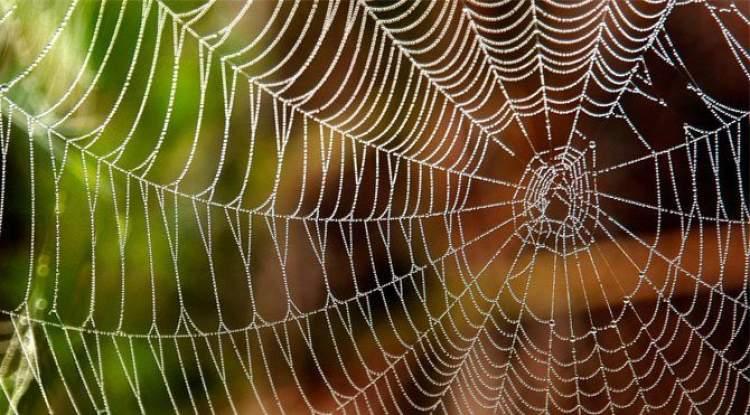 örümcek ağlarını temizlemek