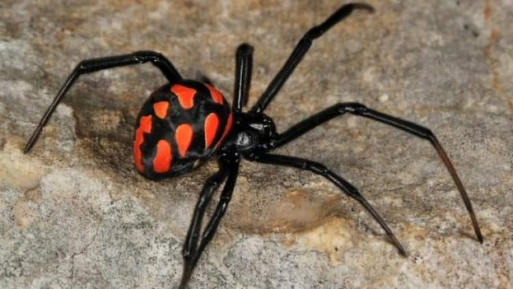 Rüyada Örümcek Öldürdüğünü Görmek