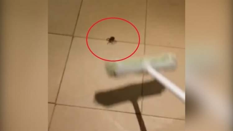 örümcek öldürmek