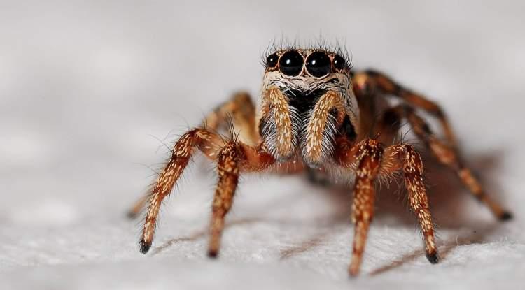 örümcek temizlemek