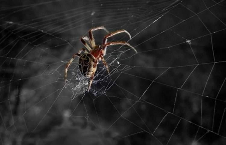 örümcek ve ağını görmek