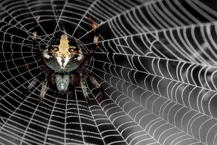 Rüyada Örümcek Ve Örümcek Ağı Görmek