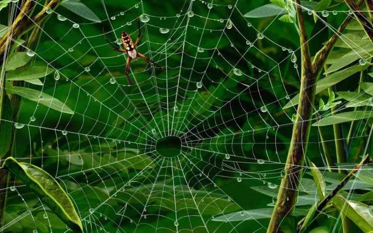 örümcek yuvası görmek