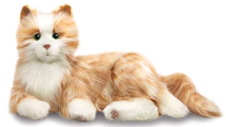 oyuncak kedi görmek