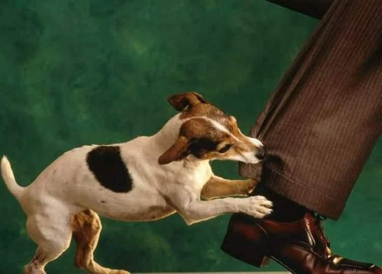 paçadan köpek ısırması