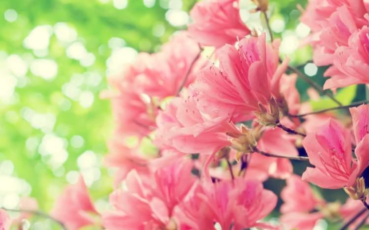 pembe çiçek görmek