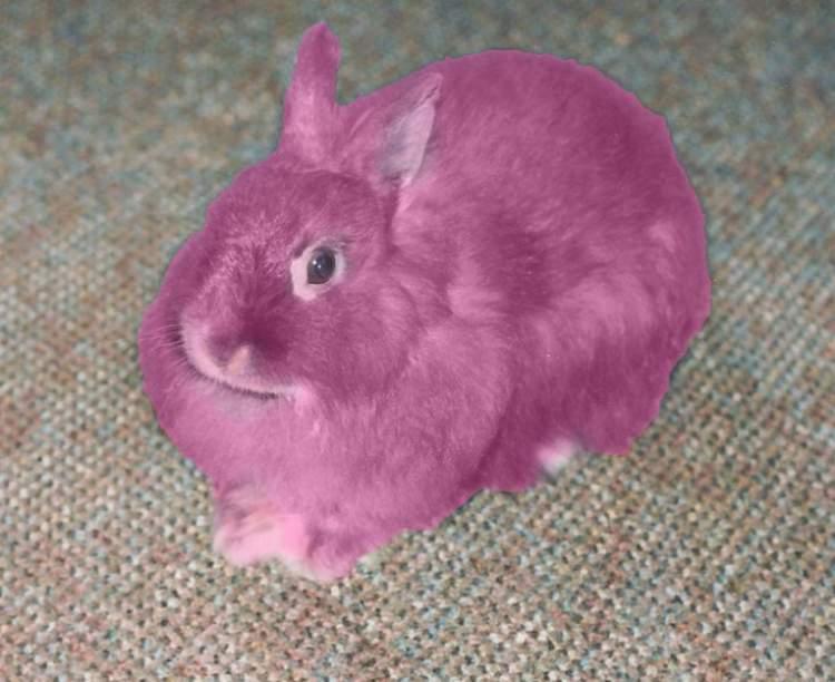 pembe tavşan görmek