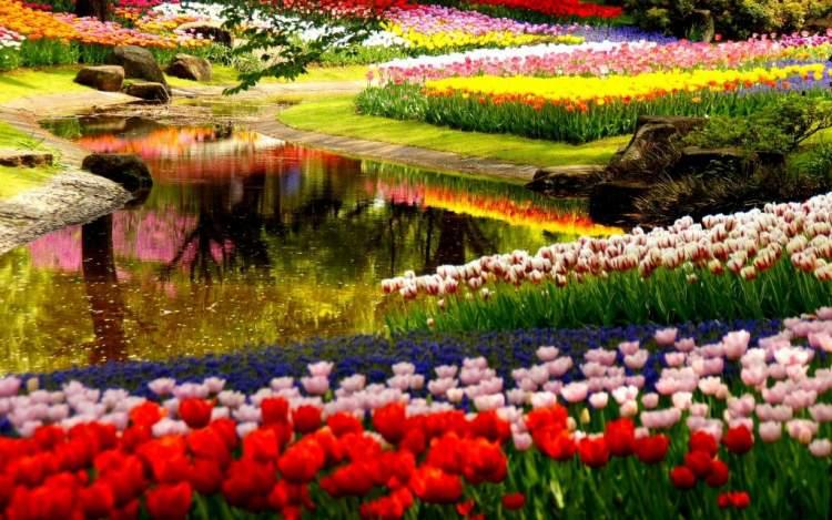rengarenk çiçek bahçesi görmek