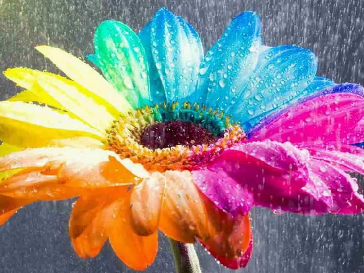 Rüyada Rengarenk Çiçek Toplamak