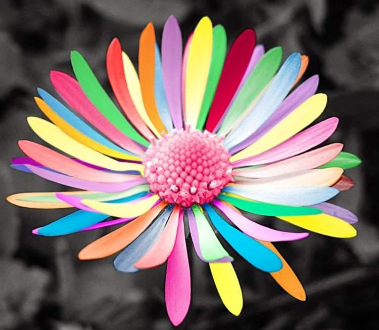 rengarenk çiçekler görmek