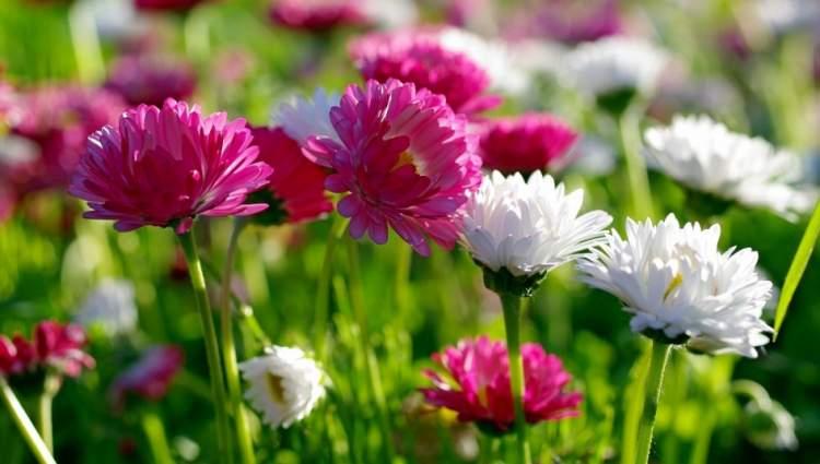 renk renk çiçek toplamak