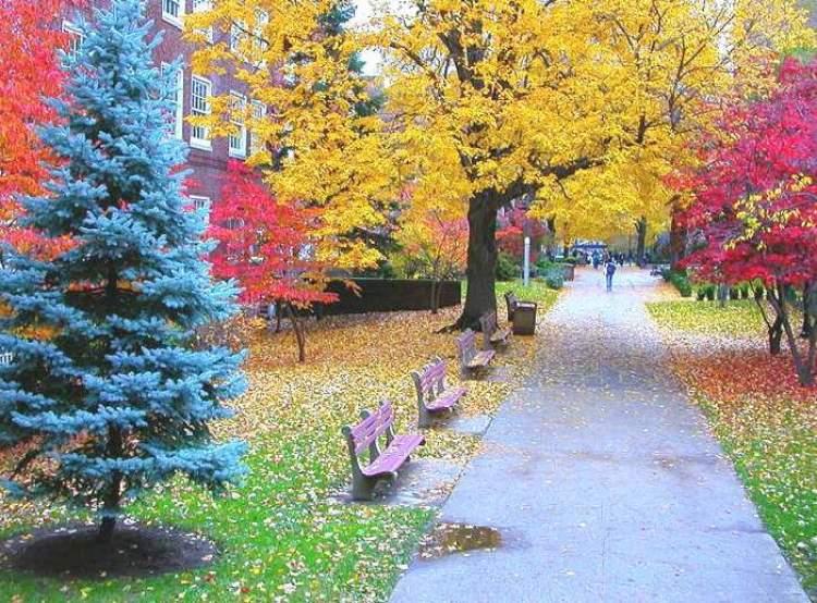renkli ağaçlar görmek