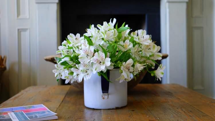 saksıda beyaz çiçek görmek