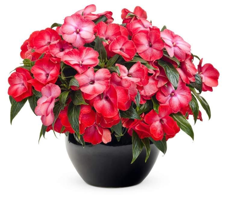 saksıda çiçek almak