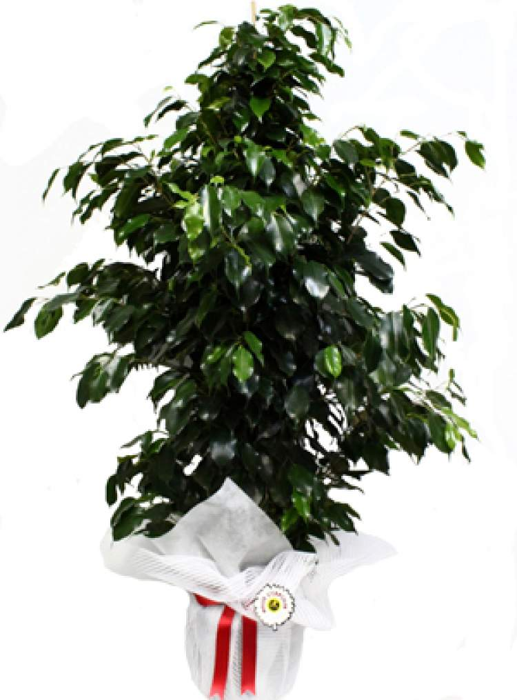 saksıda yeşil yapraklı bitki görmek