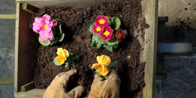 saksıya çiçek dikmek