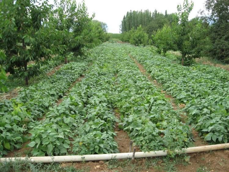 salatalık bahçesi görmek