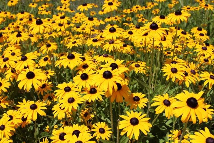 sarı çiçek hediye almak