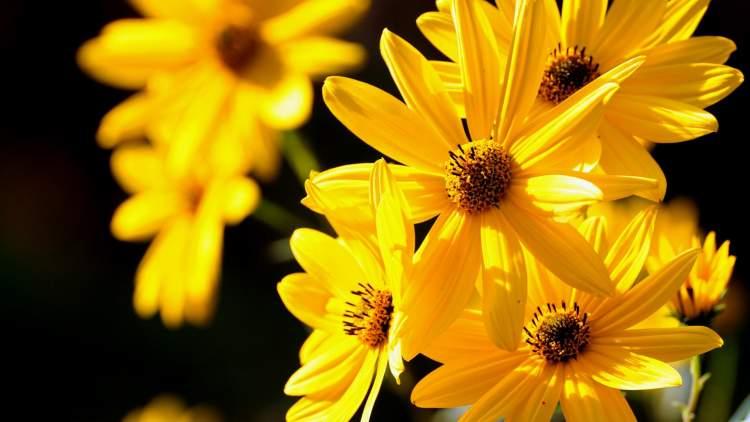 sarı çiçek toplamak