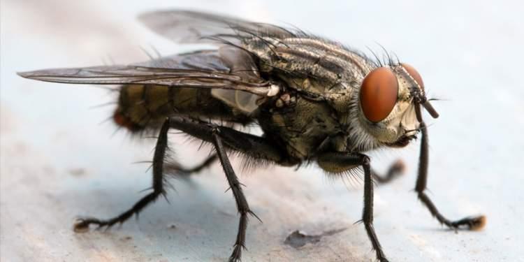sivrisinek öldürmek