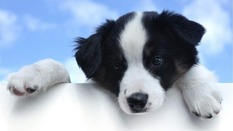 siyah beyaz köpek görmek