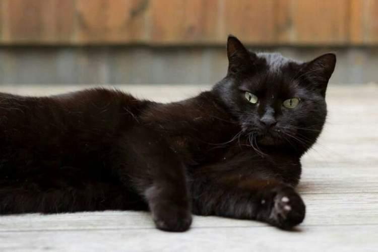 siyah kedi öldürmek