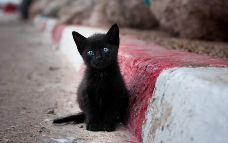 siyah kedi yavrusu görmek