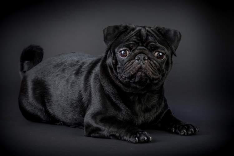 Rüyada Siyah Köpek Görmek