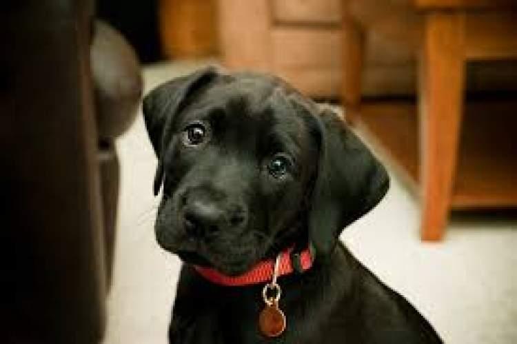 siyah köpek saldırması