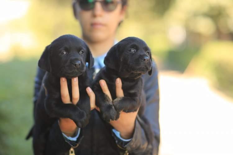 siyah köpek sevmek