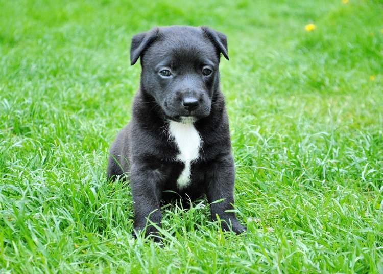 siyah köpek yavrusu görmek