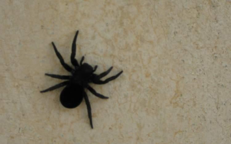 Rüyada Siyah Örümcek Öldürmek