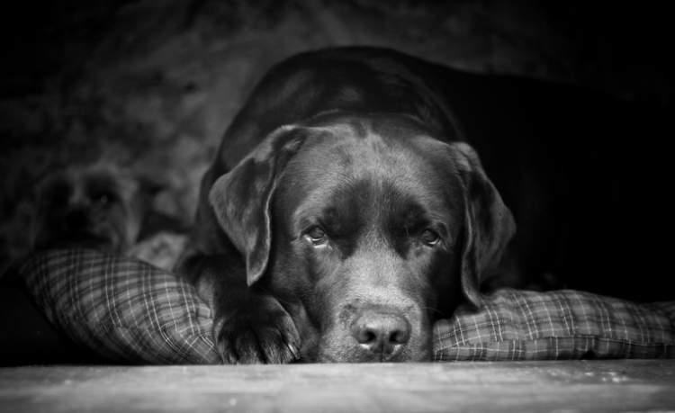 siyah ve beyaz köpek görmek