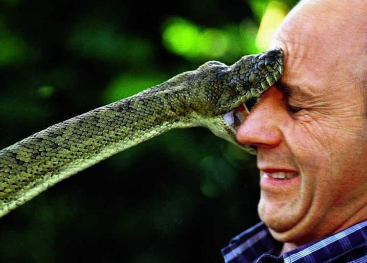 siyah yılan sokması