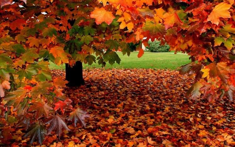 sonbahar yaprakları görmek