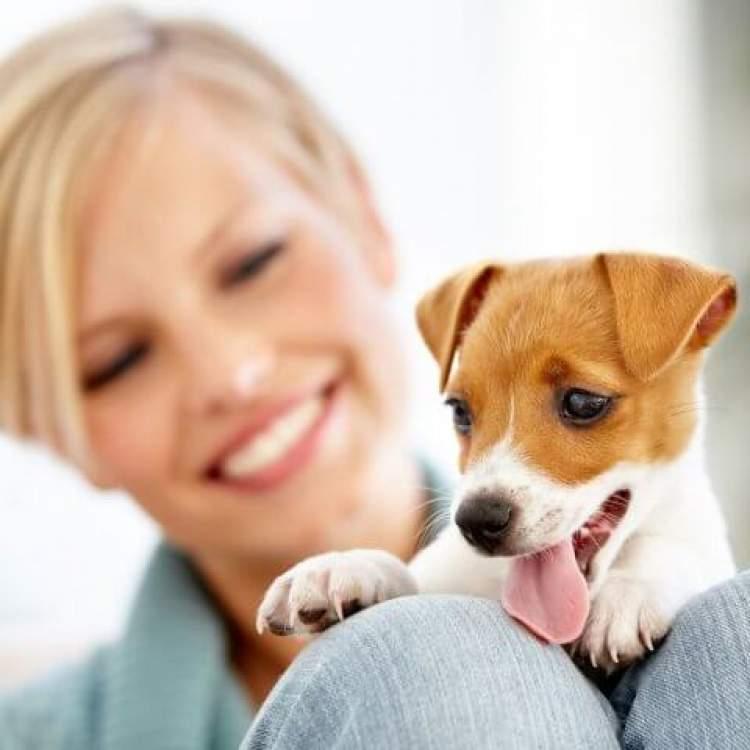 süs köpeği sevmek