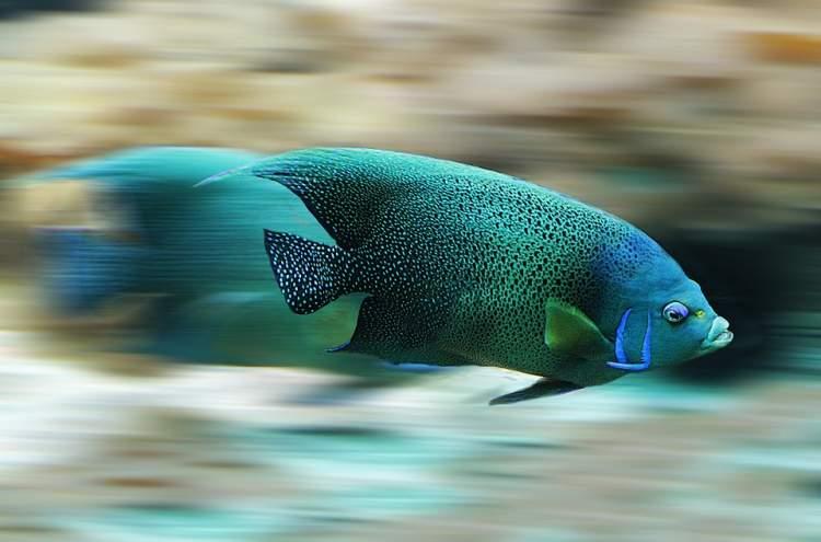 suyun içinde balık görmek